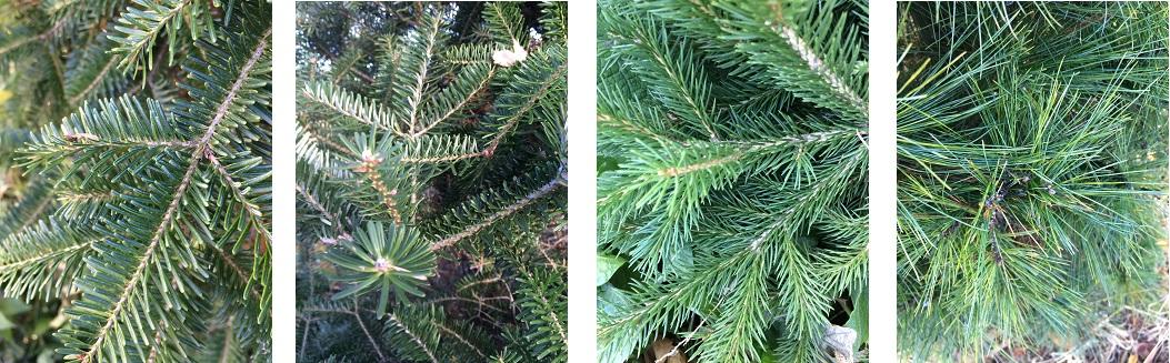 treetypes