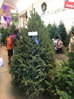 Meyers Spruce Christmas Tree 2019 Blue Ribbon